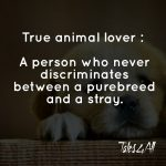 Animal Equality Quotes Twitter