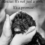Animal Rescue Quotes And Sayings Twitter
