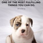 Baby Dog Quotes Tumblr