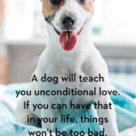 Best Dog Captions Pinterest
