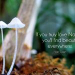 Best Quotes On Nature Beauty