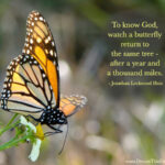 Butterfly Strength Quotes Tumblr