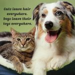 Cat Dog Sayings Twitter