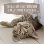 Cat Owner Quotes Twitter