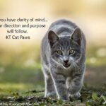 Cat Paw Quotes Twitter