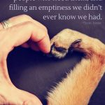 Chapter 4 Animal Farm Quotes Pinterest