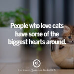 Cute Captions For Cats