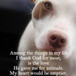 Dog Blessing Quotes Tumblr