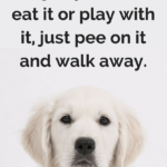 Dog Humor Quotes Facebook