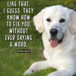 Dog Love Quotes And Sayings Facebook