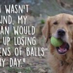 Dog Perspective Quotes Facebook