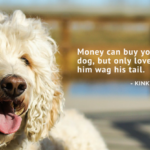 Dog Puppy Quotes Twitter