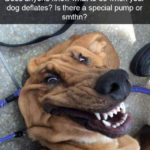 Dog Selfie Quotes Tumblr
