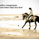 Equestrian Sayings Pinterest