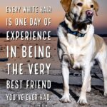 Every Dog Has One Day Quotes Tumblr