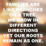 Family Is So Important Quotes Pinterest
