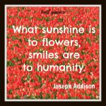Smile Quotes with Flowers Image Pinterest