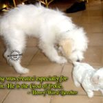 Funny Animal Sayings Pinterest