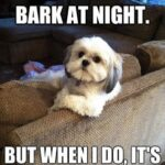 Funny Captions About Dogs Facebook