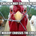 Funny Chicken Captions