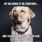 Funny Quotes About Dog Neutering Tumblr