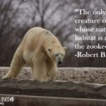 Funny Zoo Quotes Twitter