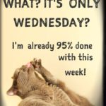 Happy Hump Day Funny Quotes