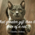Inspirational Cat Quotes Facebook