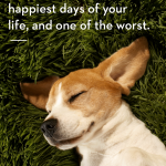 Its A Dogs Life Quotes