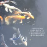 Koi Fish Quotes Twitter