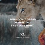 Lion Hunting Quotes Pinterest