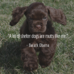 Literary Quotes About Dogs