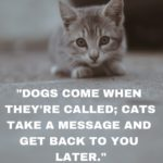 Losing Your Pet Quotes Twitter