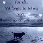 Lost My Dog Quotes Pinterest