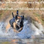 Military Dog Quotes Tumblr