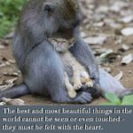 Monkey Love Quotes