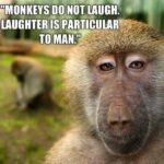 Monkey Quotes Images Pinterest
