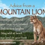 Mountain Lion Quotes Facebook