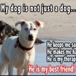 My Dog Is My Best Friend Quotes