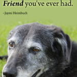 Old Dog Poems Quotes Pinterest