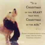 Puppy Christmas Quotes Pinterest