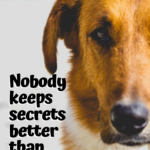 Quotes On Dogs Love And Loyalty Twitter