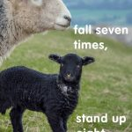 Quotes On Sheep Pinterest