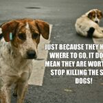 Quotes On Stray Dogs