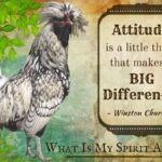Rooster Sayings