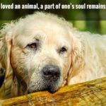 Sad Animal Quotes Facebook