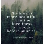 Short Quotes About The Woods Pinterest