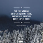 Short Tree Quotes Facebook