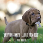 Silly Dog Quotes Facebook
