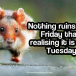 Silly Tuesday Quotes Facebook